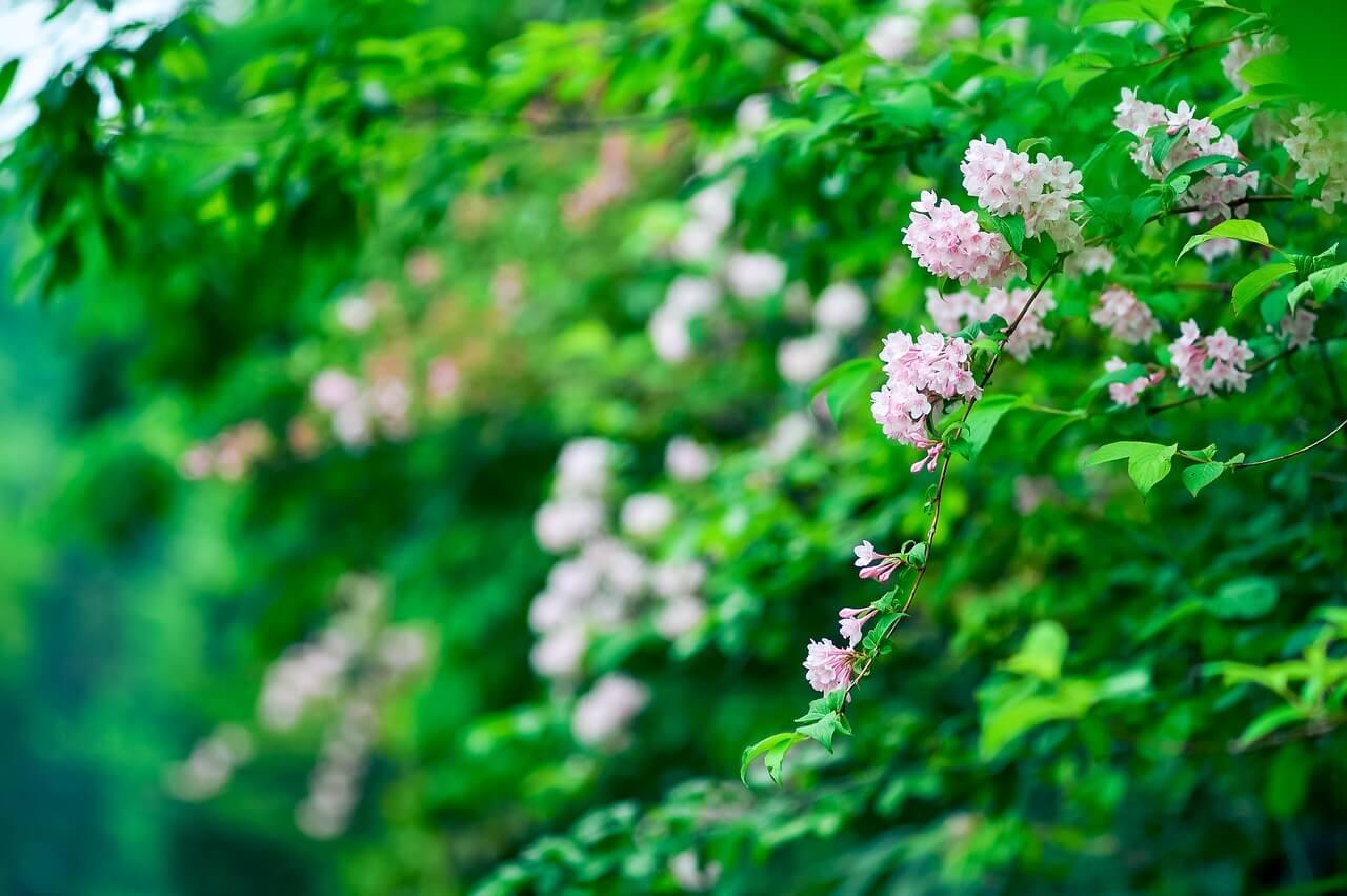 benefits of natural ingredients. natural living supplies