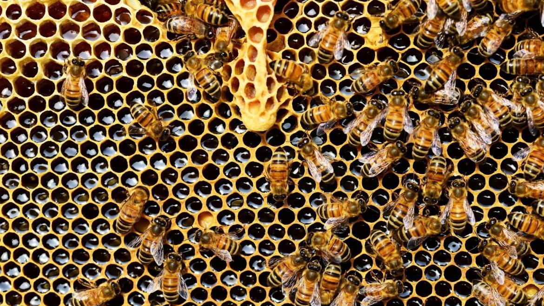 Benefits of Beeswax