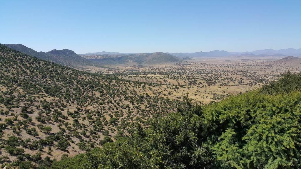 natural-living-supplies- morocco argan oil -
